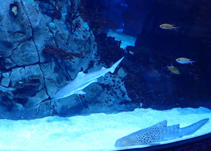 aquarium at the morocco mall