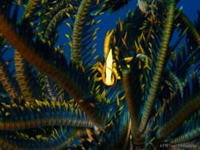 spot lobster