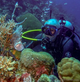pete and frogfish