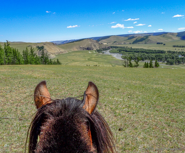 view from Mojo's ears on the Mongolian Steppe