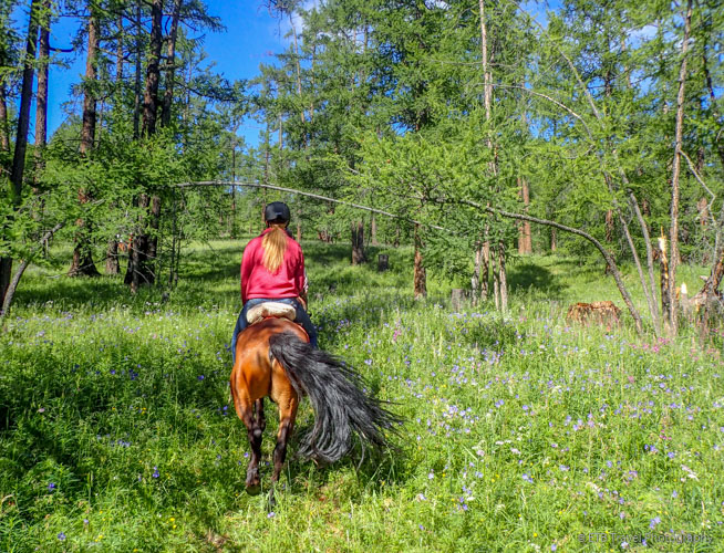 horseback riding on the Mongolian Steppe