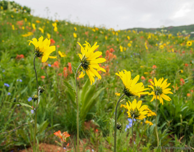 wildflower hikes in crested butte