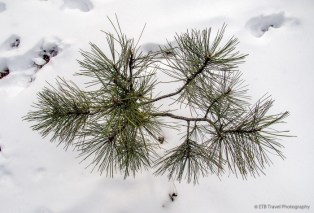 View from the top of a pine tree :-)
