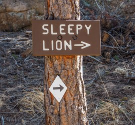 Sleepy Lion Trail