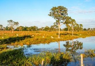 The Pantanal