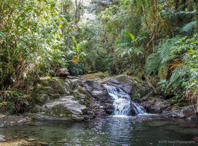 Along the creek on Three Waterfalls Trail