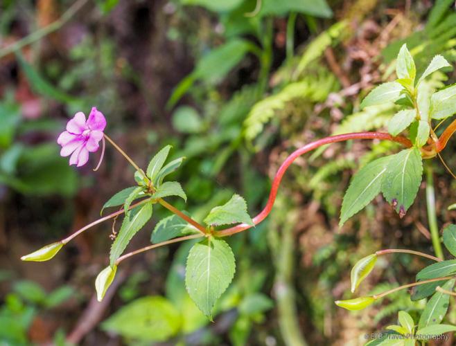 flower on three waterfalls trail