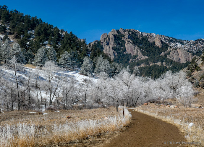 frosty trees at NCAR