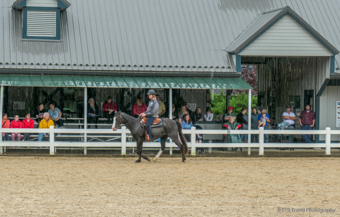 one of the horses in the parade of breeds