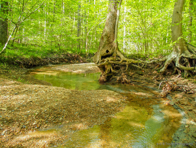 creek in Brown County State Park