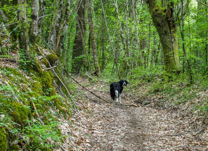 elmo in the woods