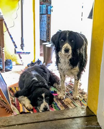brisca and elmo on the farm in correze