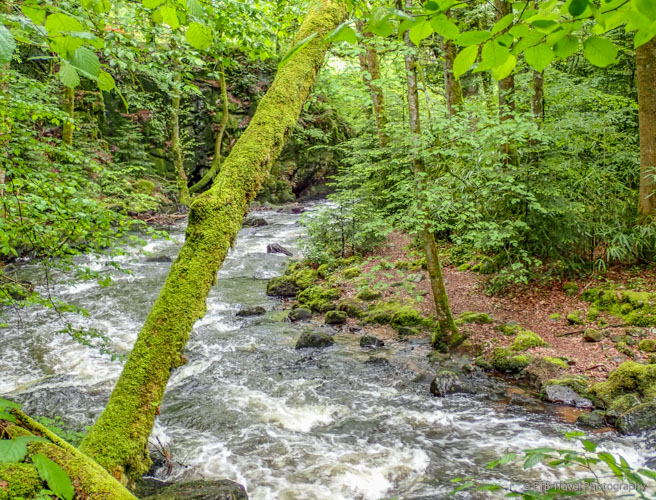 montane river