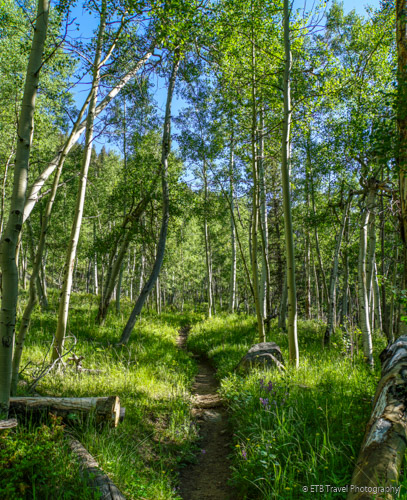 aspen grove on Three Mile Creek Trail