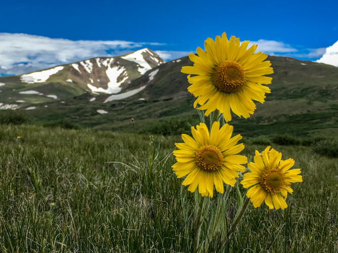 sunflowers on the way to Geneva Mountain