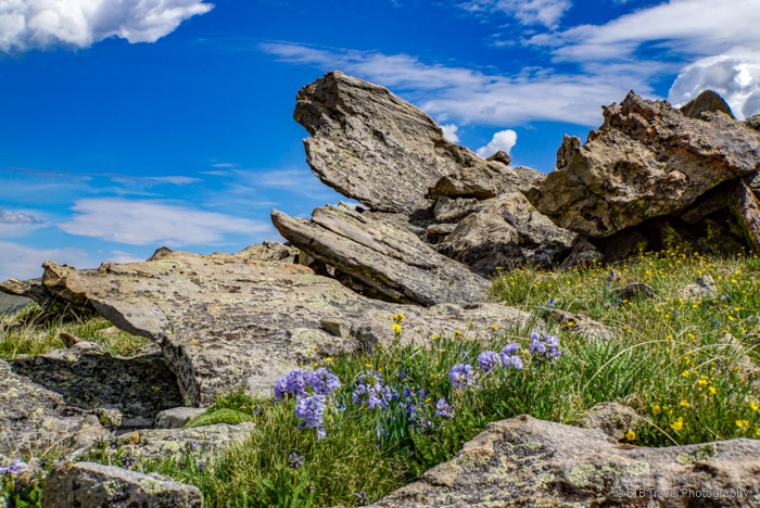 rocks and flowers on the first peak