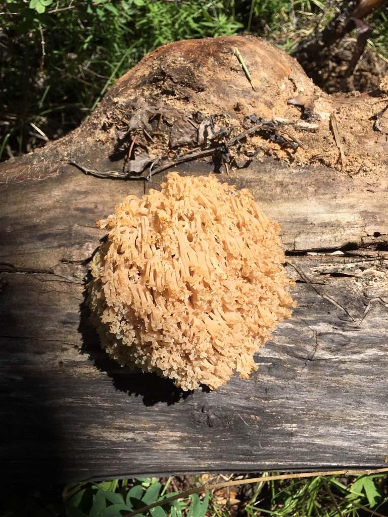 sponge on the Sneffels Traverse