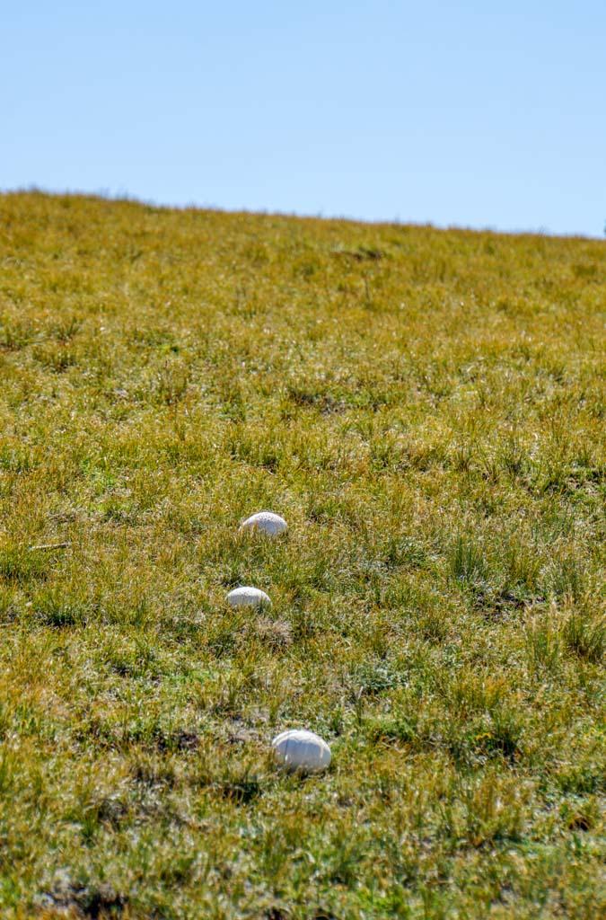 mushrooms on the way to bison peak