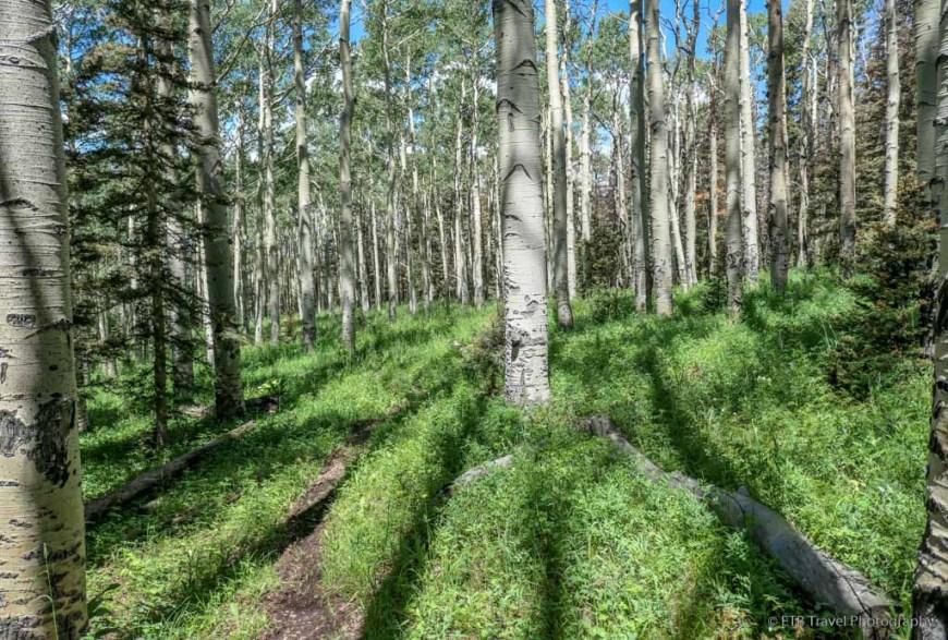 aspen grove on the Sneffels Traverse