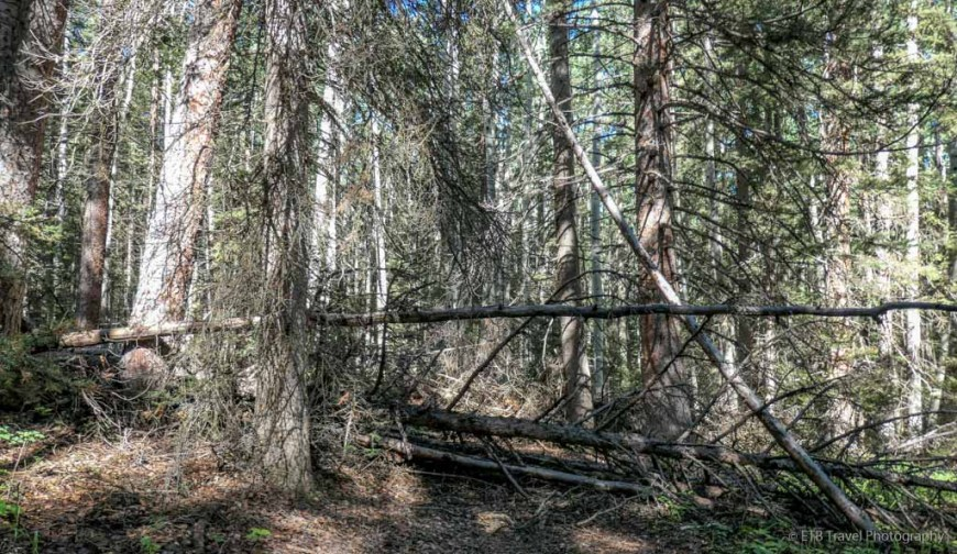 trail blocked by trees