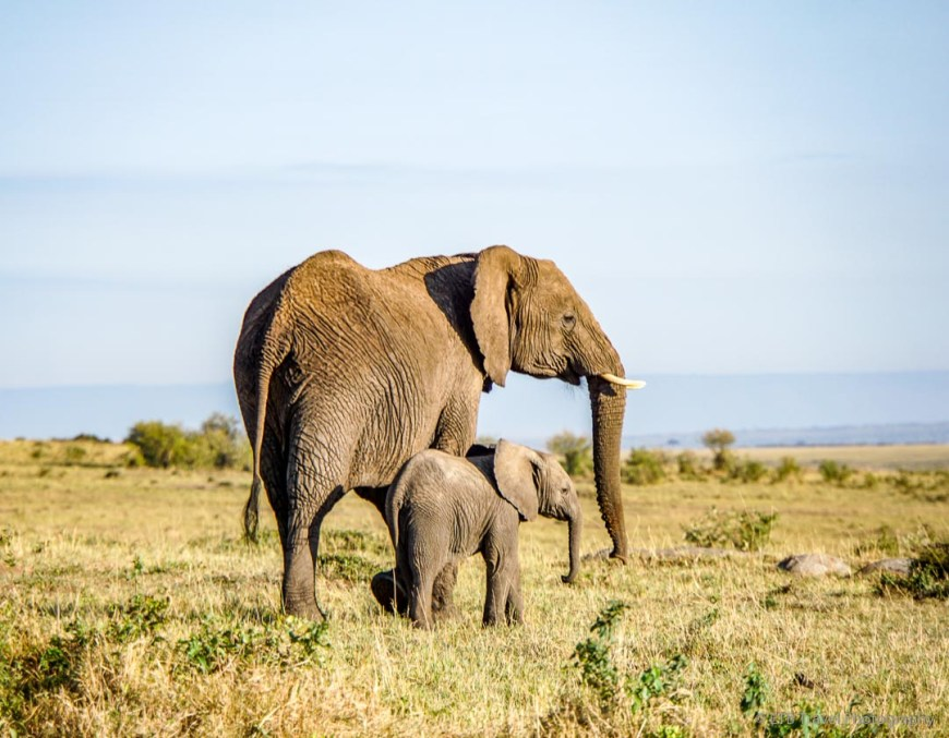 elephant mama and baby