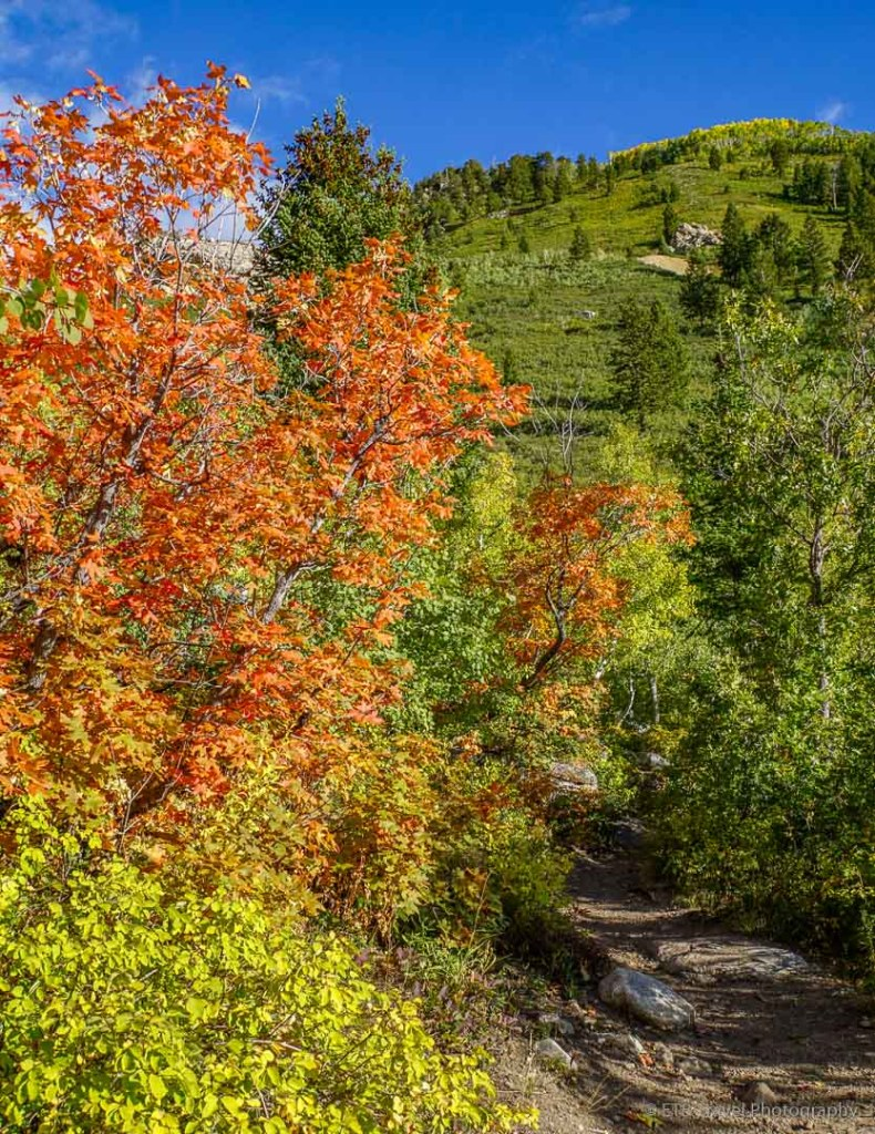 Silver Lake Trail in American Fork Canyon