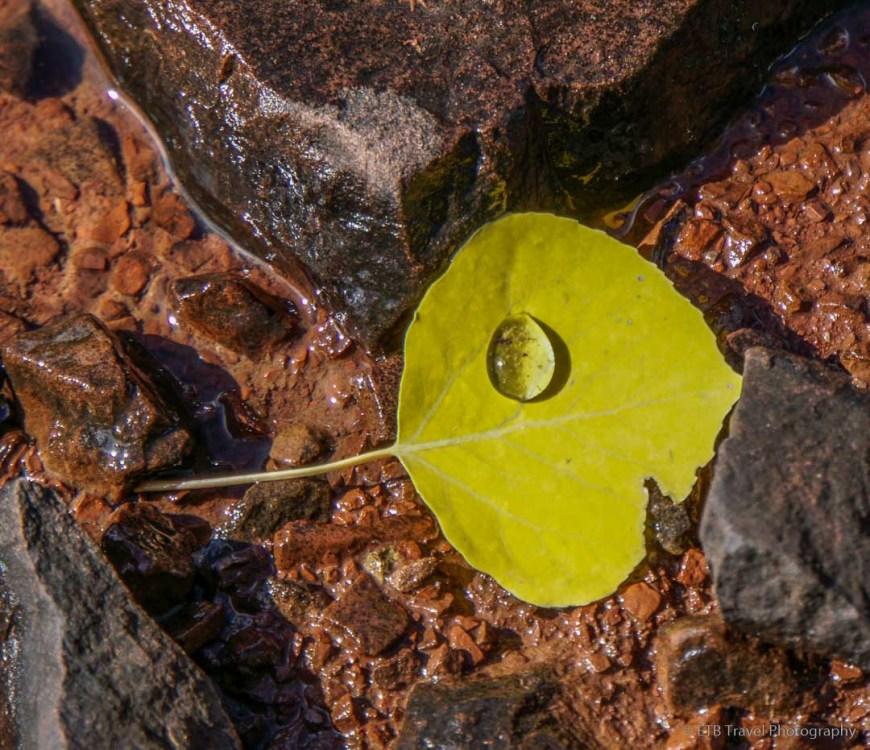 aspen leaf in Desolation Lake