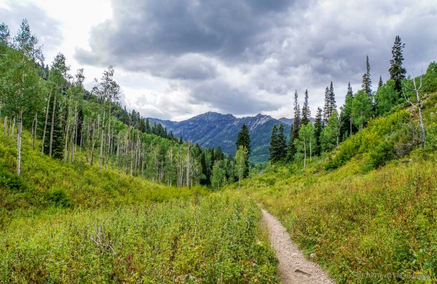 Mill D Fork Trail in Big Cottonwood Canyon