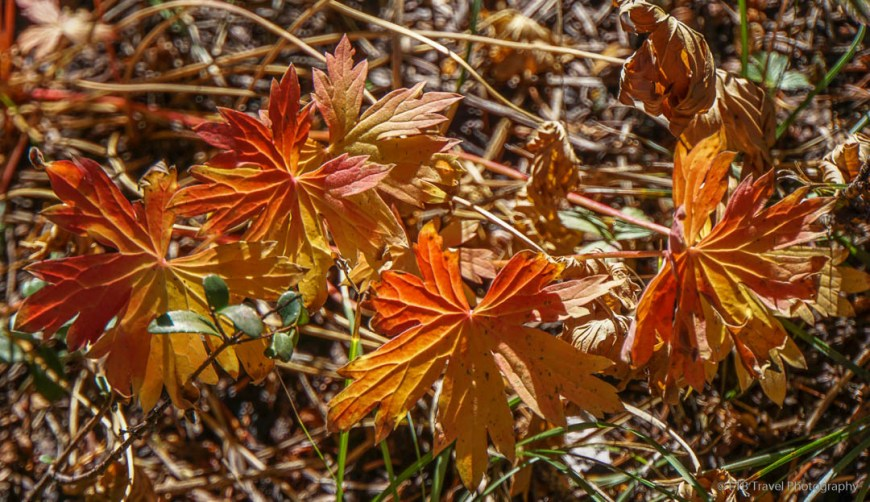 fall colors in Bells Canyon
