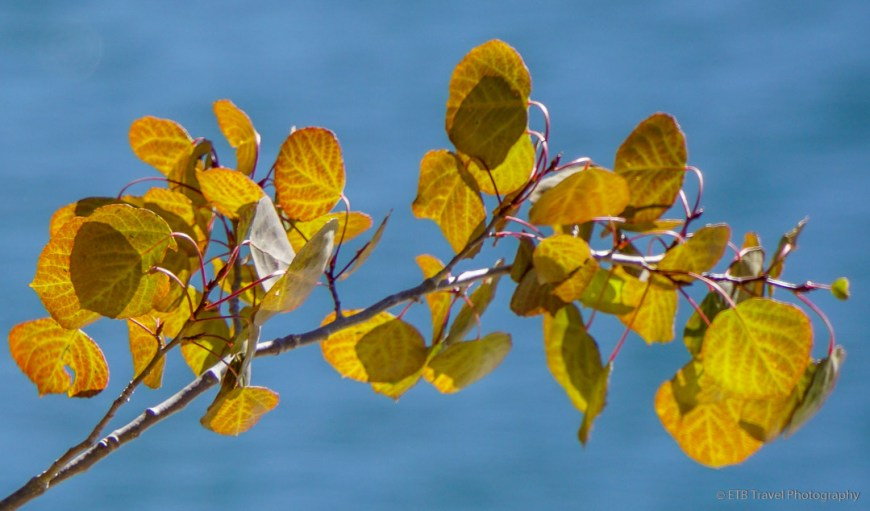 aspen leaves at Twin Lakes