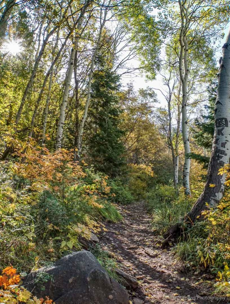 Mill B South Fork Trail in Big Cottonwood Canyon