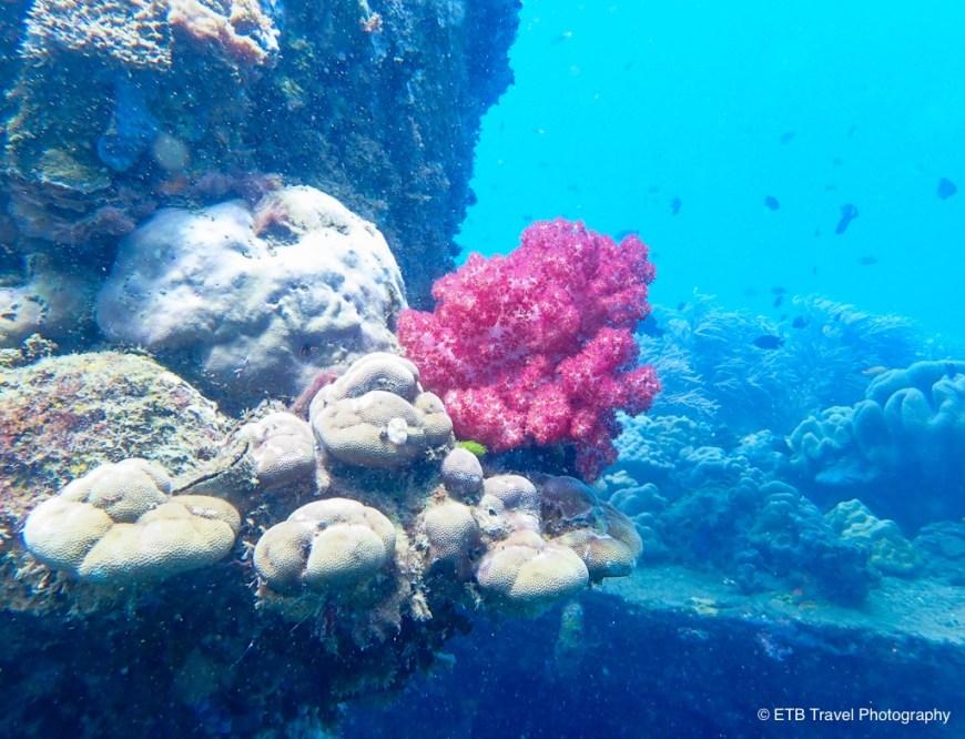 coral encrusted bonegi II in the Solomons