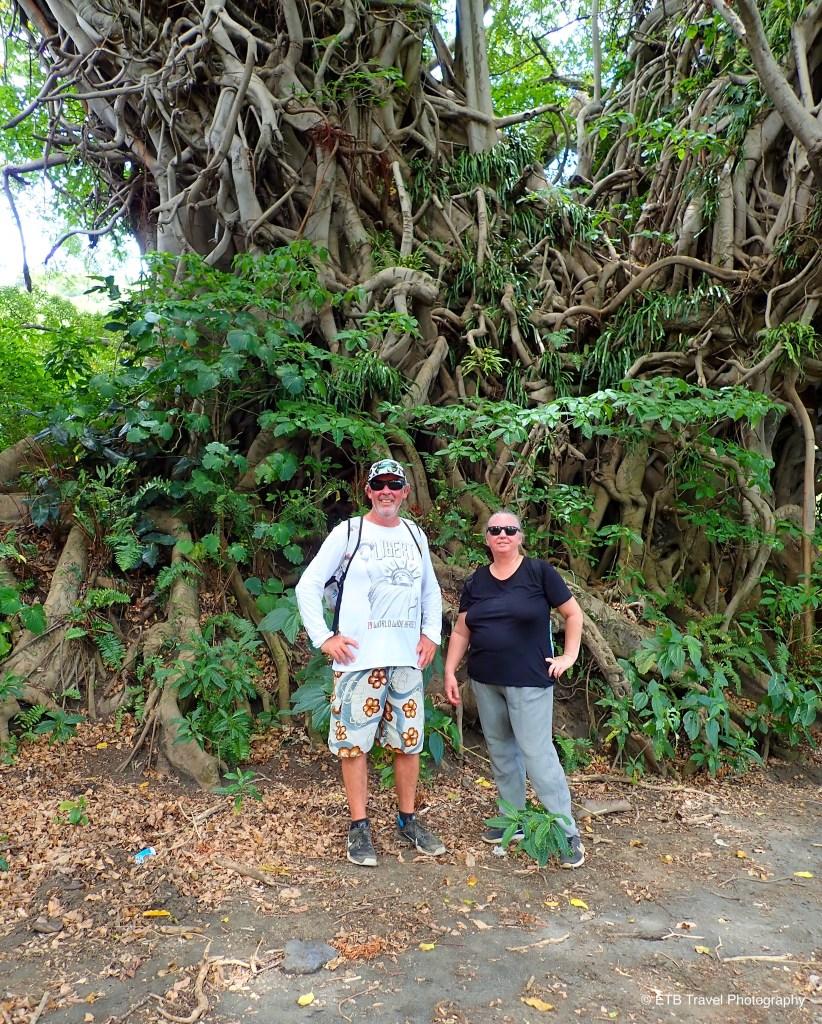 under a banyan tree in tanna