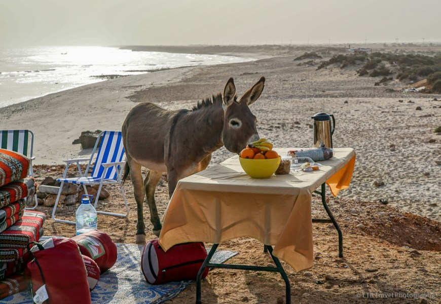 donkey joining us for breakfast on Fins Beach