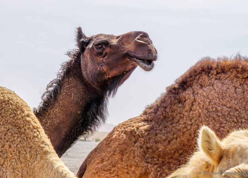 dark brown camel