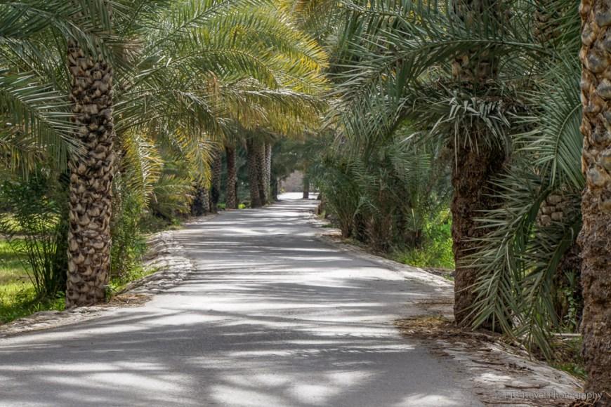 road through birkat al mawz