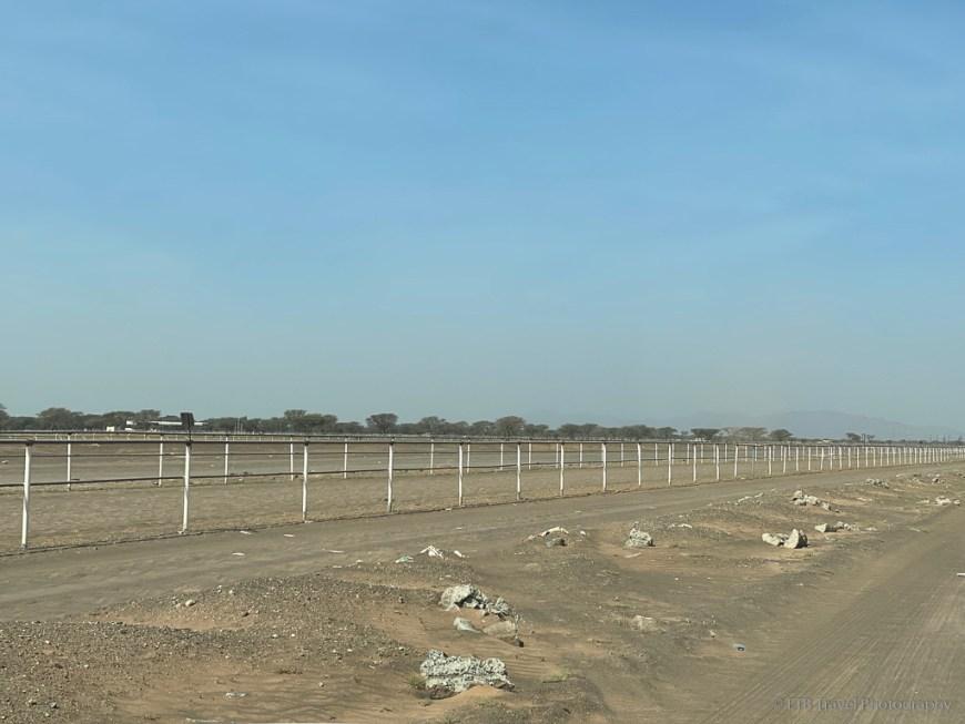 camel track in Oman