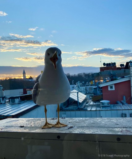 seagull for breakfast in istanbul