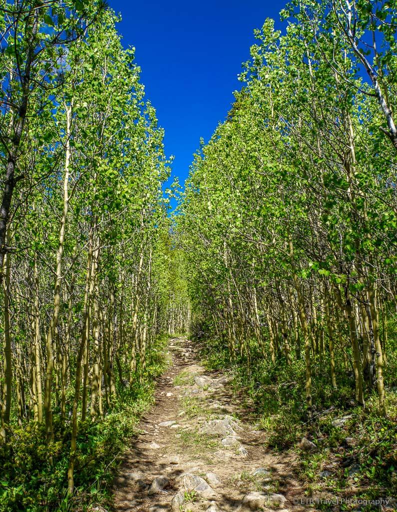 aspen grove on Bruno Gulch Trail
