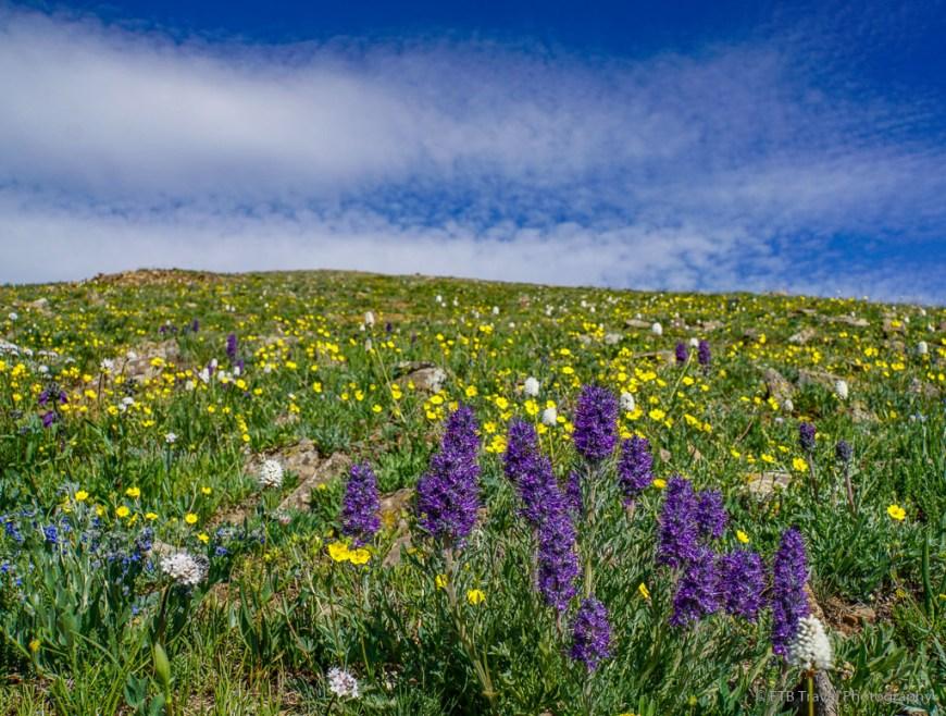 wildflowers on Pennsylvania Mountain