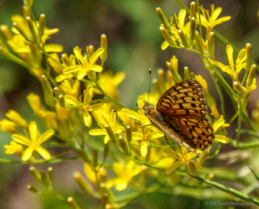 butterfly on mad creek trail