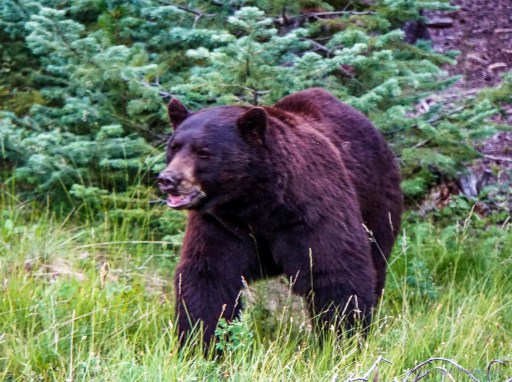 bear at grand lake lodge