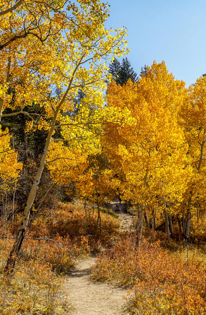 aspen grove on raccoon trail