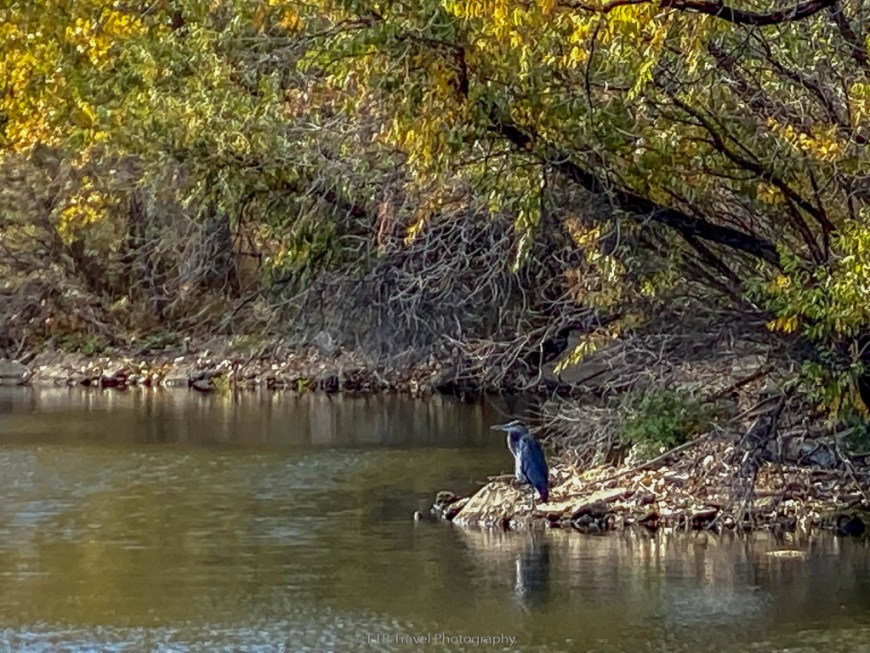 heron at vanderbilt lake