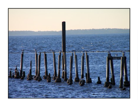 photographic note card, old pier in florida