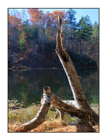 Photographic note card, dead tree and lake