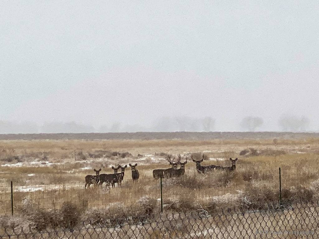 deer at Rocky Mountain Arsenal National Wildlife Refuge
