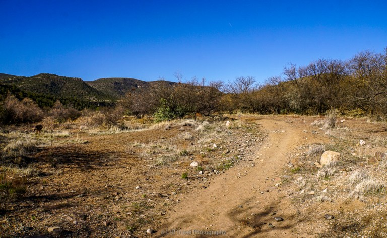 copper canyon loop trail #504