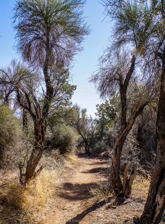 trees on copper canyon loop trail #504