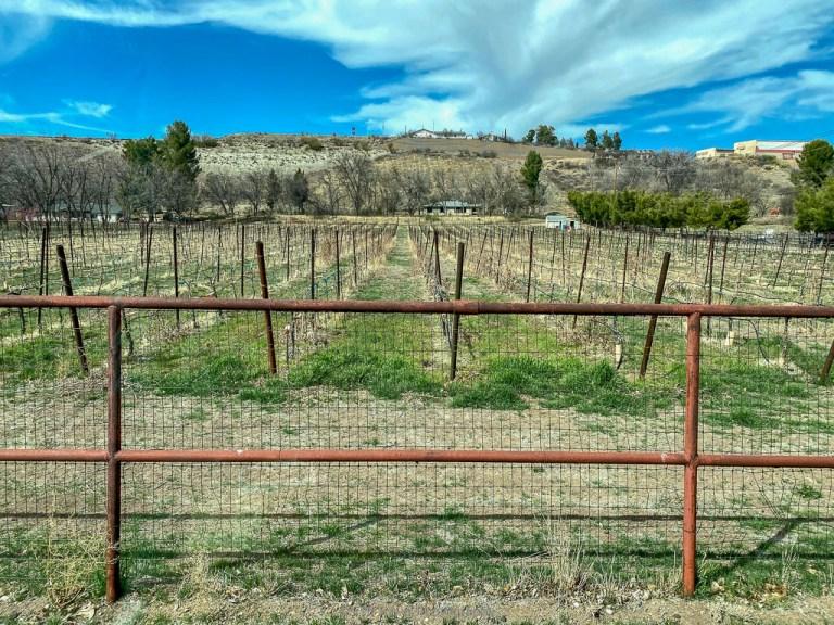salt mine vineyard and winery